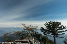 volcan Villarica et Araucarias depuis le Cerro San Sebastian - PN Huerquehue - Chili
