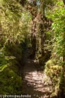 Randonnée Ventisquero Colgante - PN Queulat - Region de Aysen - Chili